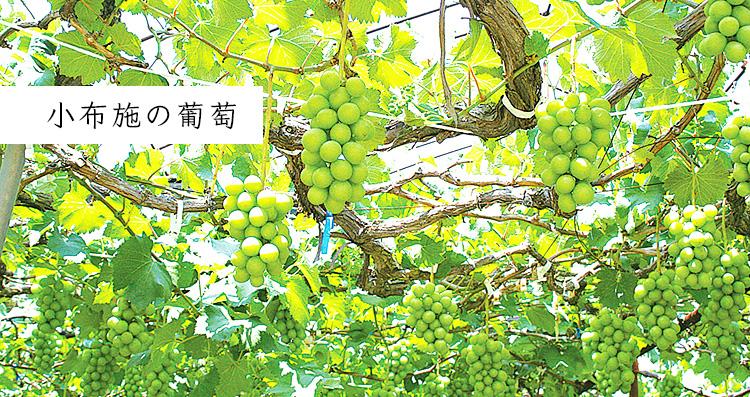 小布施の葡萄
