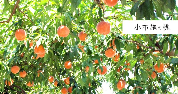 小布施の桃
